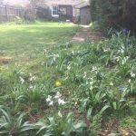 Taming a Garden